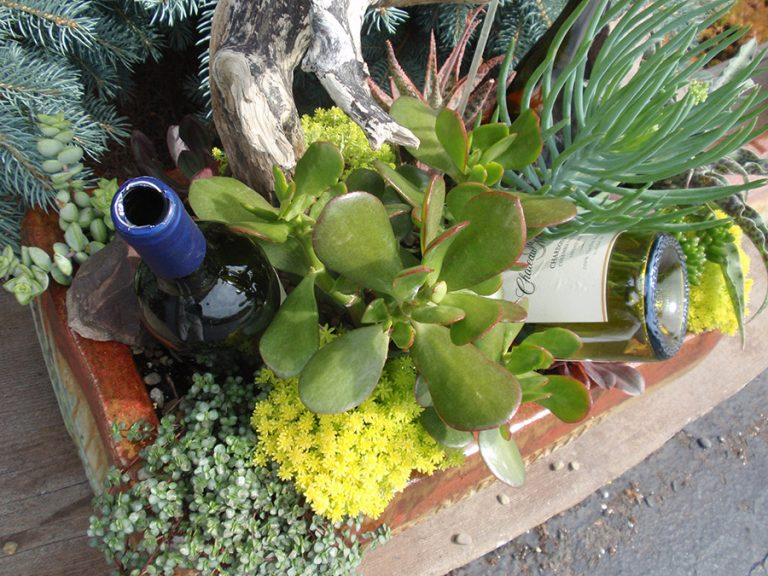 container garden with succulents and empty wine bottles