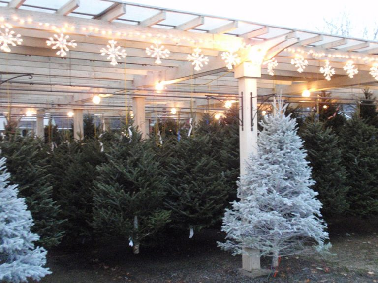 holiday trees for sale on display with snowflake lighting