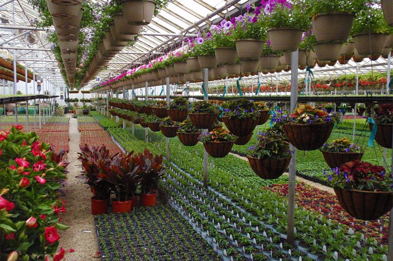 Interior View Of Greenhouse At Bremec Of Chesterland