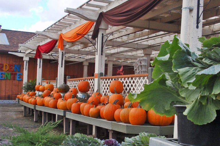 pumpkins on display at Bremec on the Heights