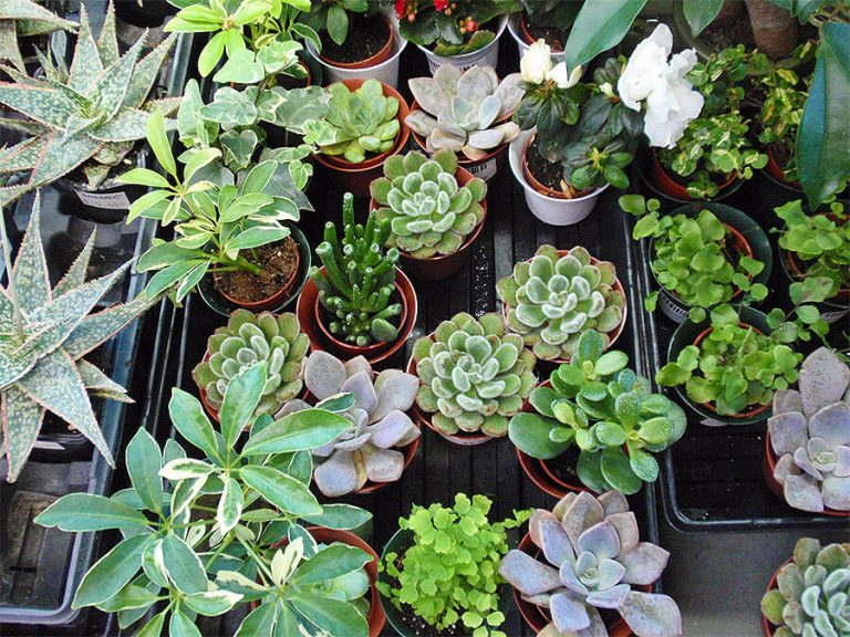 assorted succulents and potted plants