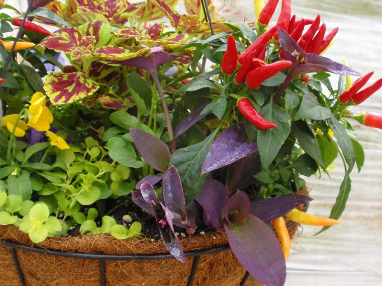 potted plant with brightly colored assorted flowers