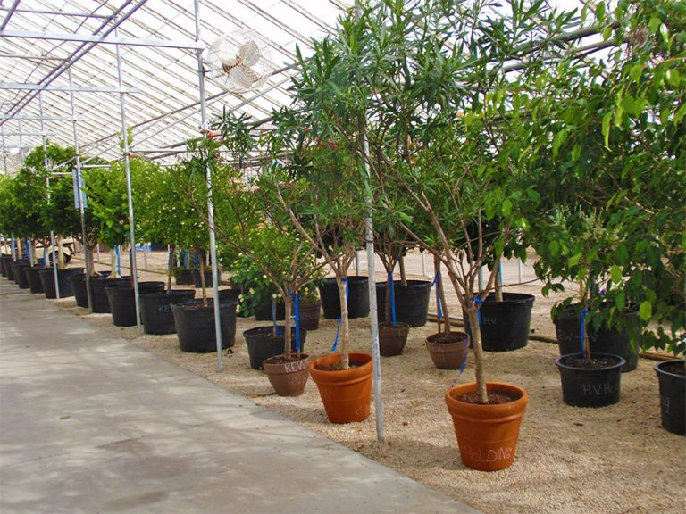 potted trees for sale at Bremec Garden Center