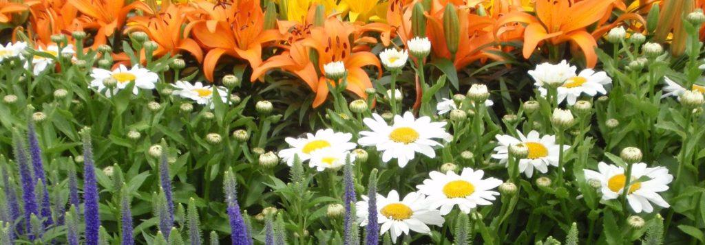 Best Perennials Near Me