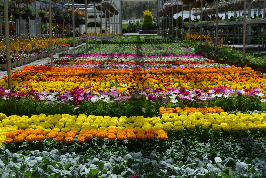 Best Annual Flowers and Annual Selection