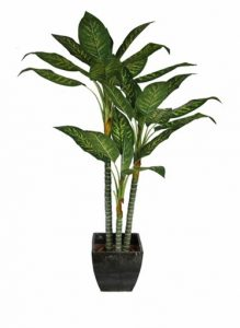 bremec houseplants