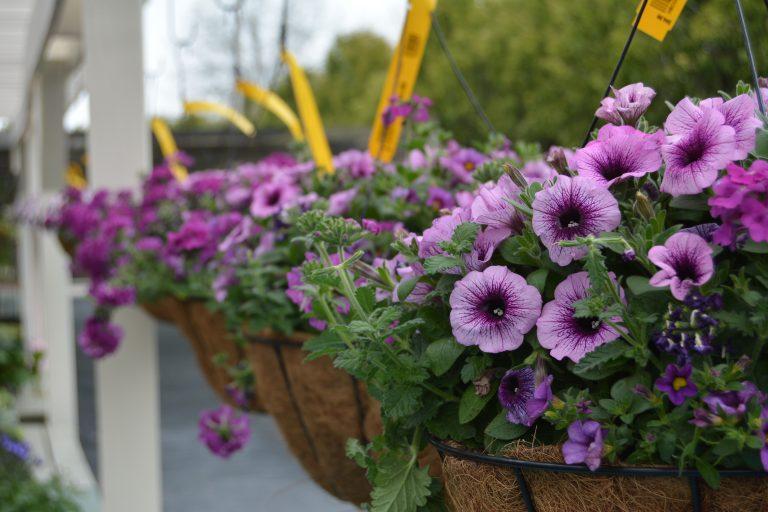 Hanging Baskets for Sale Highland Heights