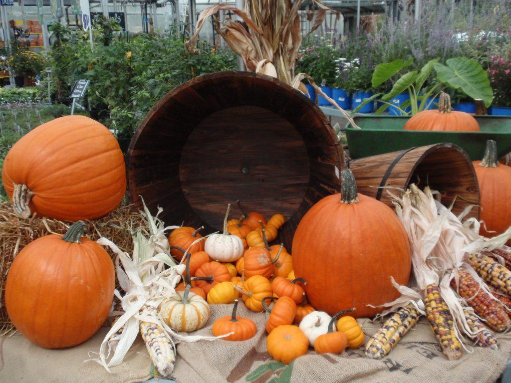 Autumn Decorating Contest