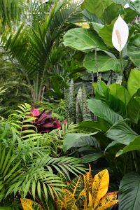 best tropical plants near me