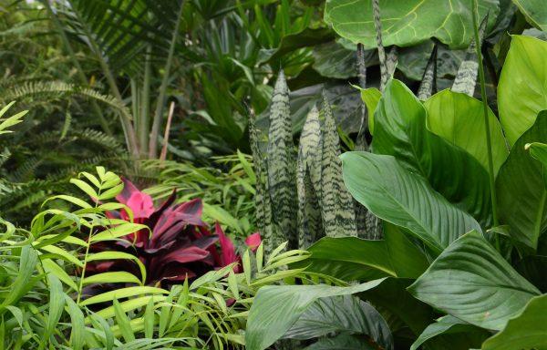 Chesterland Indoor Plants & Tropicals