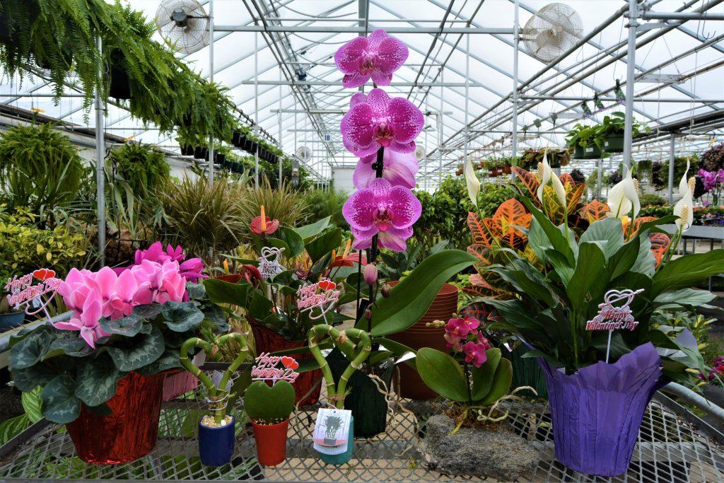 Valentines Day Gift Idea Plants