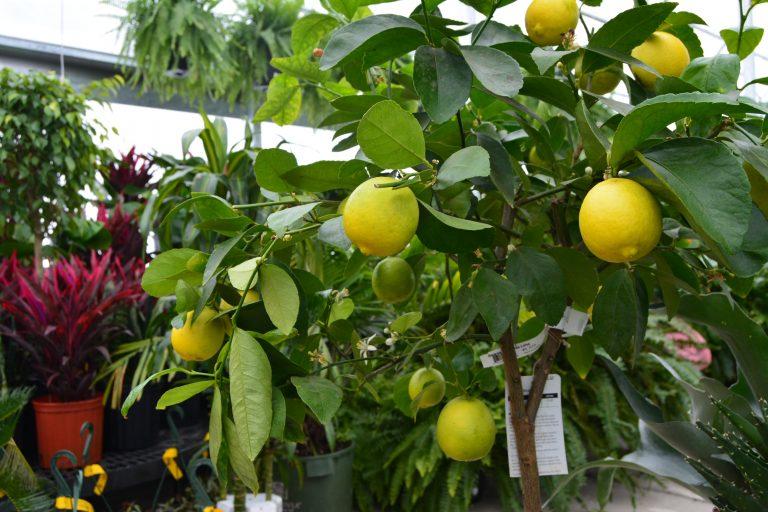 Tropical Plants Fruit