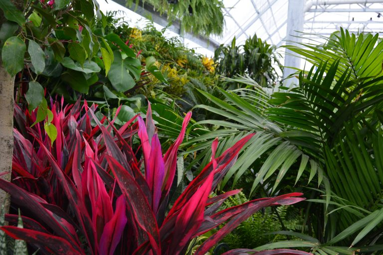 Find Tropical Plants for Sale