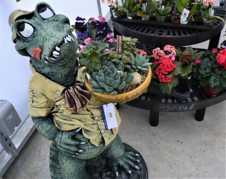 Tropical Succulents and Statues