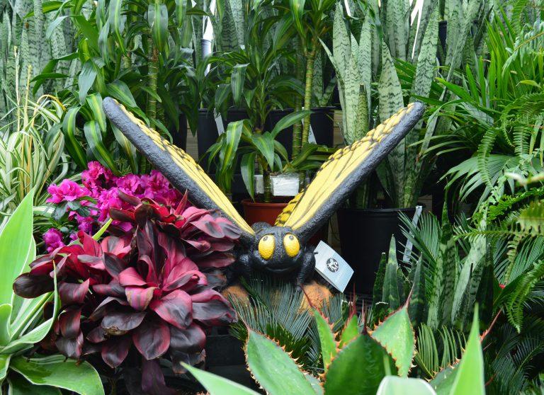 Tropical Greenhouse Plants