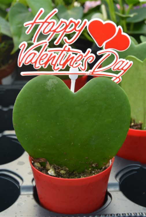 Valentines Day Gift Idea Bremec