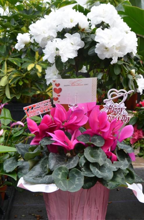 Unique Valentines Day Gift Plant