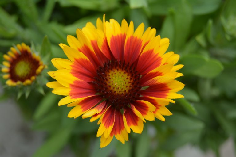 Ohio Perennial Flowers