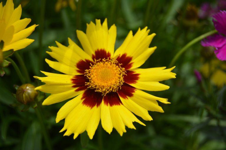 Buy Perennial Flowers Near Me