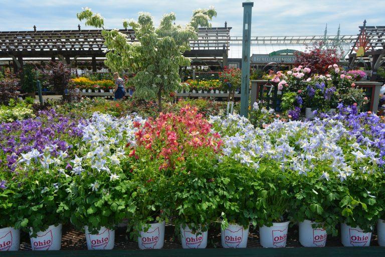 Find Ohio Perennial Flowers
