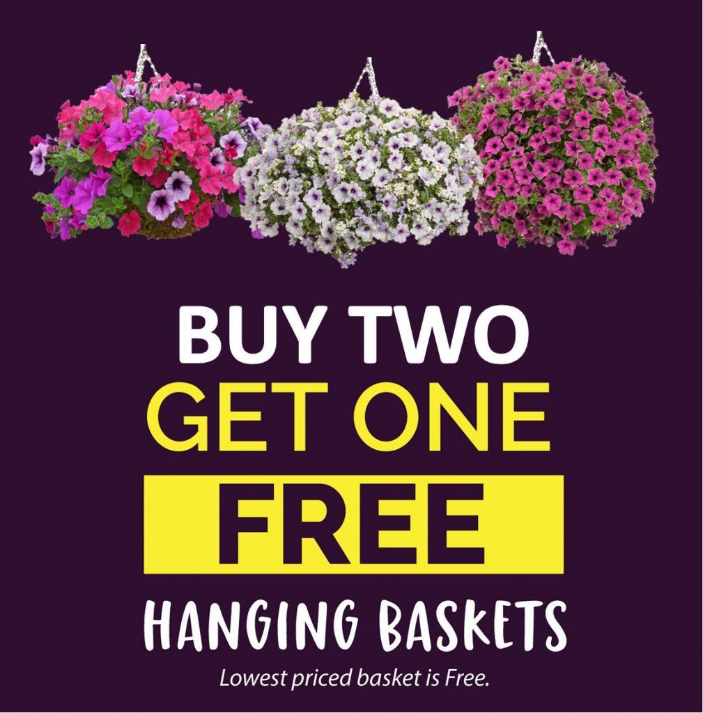 Best Deal Hanging Baskets